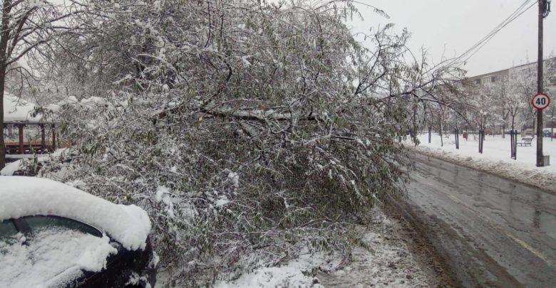 copac cazut linii afectate