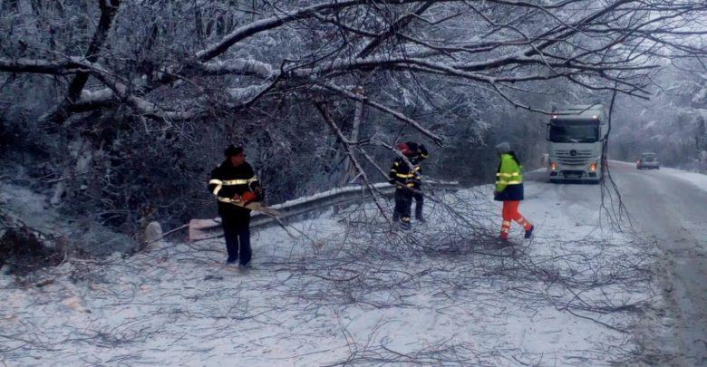 copac cazut pe drum