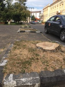 copaci-taiati-zalau